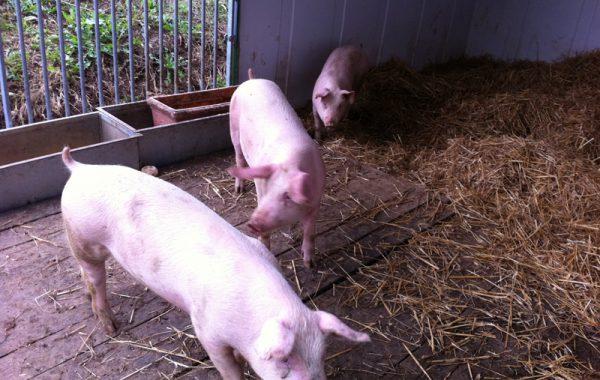 Agriturismo con animali