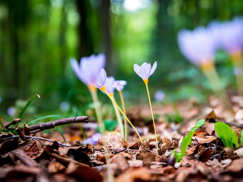 Flora e fauna della Brianza